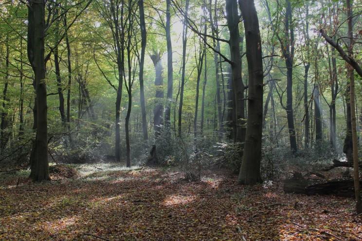 Wald Holz Bäume